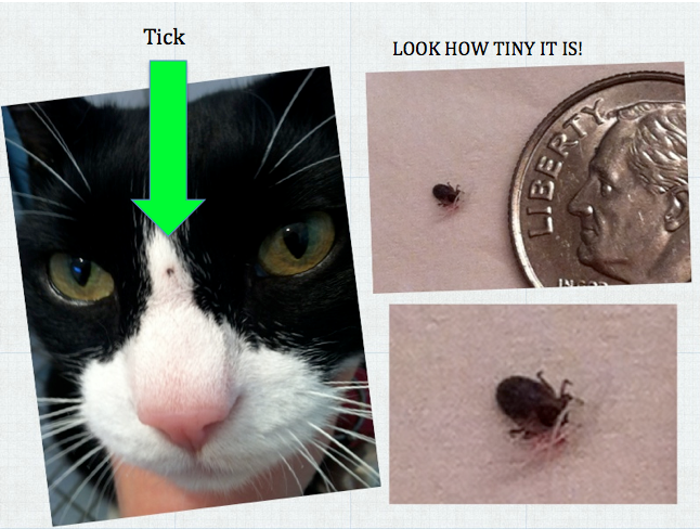 Tick #3 on Sylvester's Nose