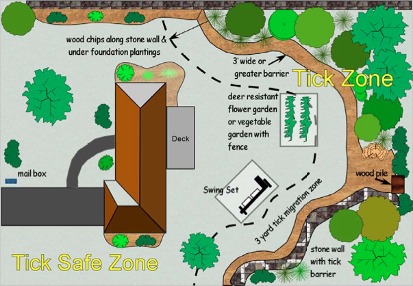 Tick Safe Zone (Image from CDC)